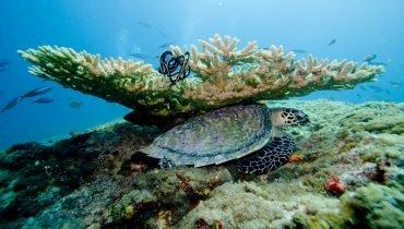 Seeschildkröte sucht Schutz