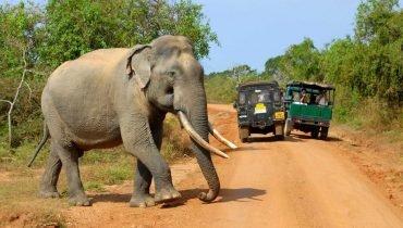 Der Größte unter den Big Five: Der Elefant